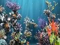 Coral Reef Aquarium Screenshot