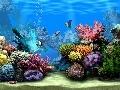 Living Marine Aquarium 2 Screensaver Screenshot